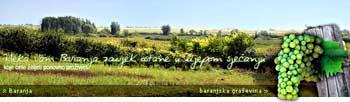 baranja wine