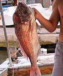Sea Fishing in Croatia's Adriatic Sea
