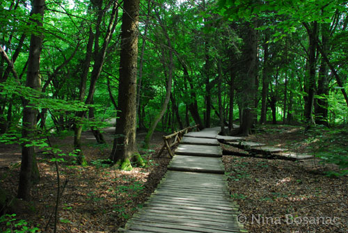 walking-trail-plitvice1